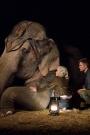 elephants_183c
